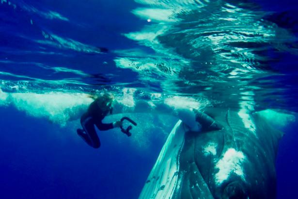 Baleia salva bióloga marinha de ataque de tubarão de mais de 4 metros