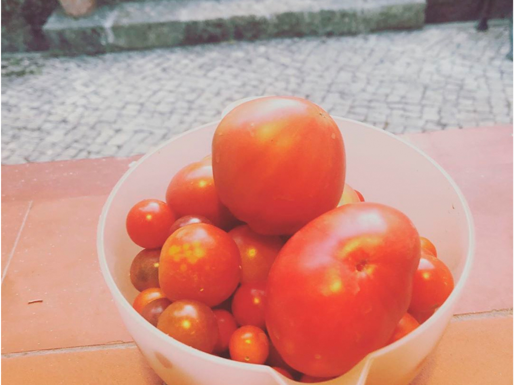 Tomates - Presente de Férias